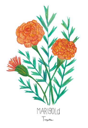 Marigold - Image for LCDLL - 2.10.2019